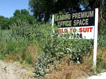 Noxious and invading weeds can destroy property values